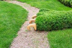 Hecke in Form von Buchsbaum auf einem grünen Rasen lizenzfreie stockfotos