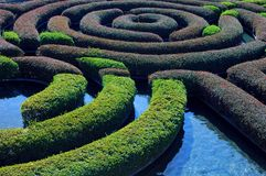 Hecke-Garten Lizenzfreies Stockfoto