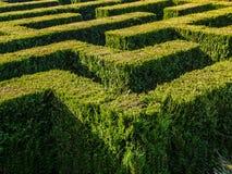 Hecke gebildetes Labyrinth lizenzfreie stockfotos
