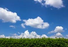 Hecke gegen den Himmel lizenzfreies stockfoto
