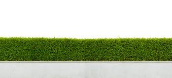 Hecke lokalisiert auf Weiß Stockbilder