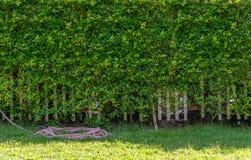 Hecke oder Zaun hergestellt durch Blätter lizenzfreie stockfotos