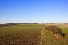 Hecke und Weizen Stockfotografie