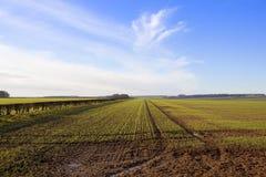 Hecke und Weizen Stockbild