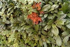 Hecke, welche die Farbe in der Herbstsaison ändert lizenzfreie stockbilder