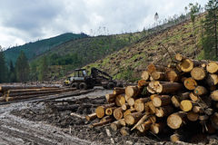 Hectárea de árboles derribados después de pasar huracán Foto de archivo libre de regalías