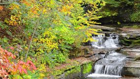 Hector Falls New York. Hector falls in New York surrounded by trees and plants with peak fall colors. A beautiful roadside waterfall just north of Watkins Glen stock footage
