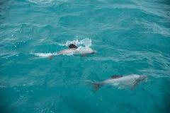 Hectors delfin Royaltyfri Bild