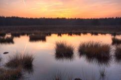hed över solnedgång arkivbild