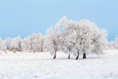 Hed med träd och frost royaltyfri bild