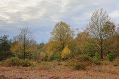 Hed och skog i den Heidebos naturreserven, wachtebeke, Belgien royaltyfria foton