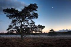 Hed på nightfallen arkivbild