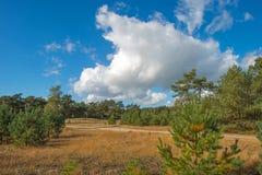 Hed som klänger en skog arkivfoton