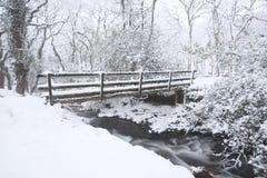 Hedbäck i vintern devon UK arkivfoto