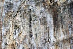 Heder av trät Royaltyfri Fotografi