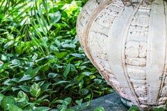 Hedera Colchica dal vaso Fotografia Stock