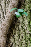 Hedera Helix On A Tree Stock Image