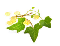 Hedera with pills Royalty Free Stock Image