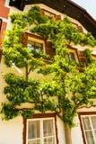 Hedera, usine boisée de terre-rampement sur la façade de maison, Hallstatt, Autriche image libre de droits