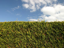 The Hedge stock photography