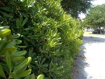 hedge imagem de stock