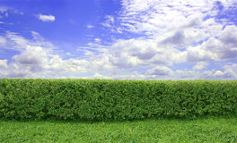 The Hedge royalty free stock images