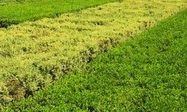 Hedge Stock Photos