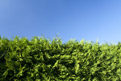 Hedge Stock Photos