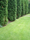 Hedge. In botanical garden Royalty Free Stock Photos