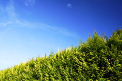 Hedge Royalty Free Stock Photo