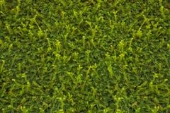 hedge Imagens de Stock Royalty Free