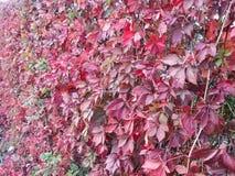 hedge Foto de Stock