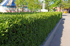 Hedge Stock Photography