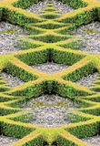 Hedge. Reflection image of small box hedge Stock Photo