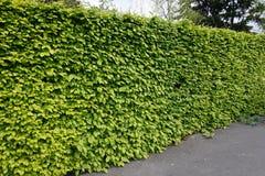 hedge foto de stock royalty free
