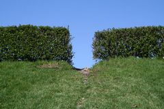 Hedge. A hedge with a path going through it Stock Photos