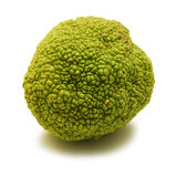 Hedge apple Royalty Free Stock Photo