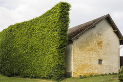 Hedge as windbreak Stock Image