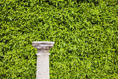 Hedge Background and Column Pedestal Royalty Free Stock Photo