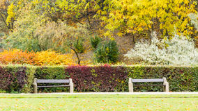 Hedge behind two benches. Royalty Free Stock Image