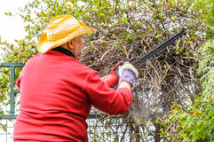 Hedge cleaning with electric trimmer Royalty Free Stock Images