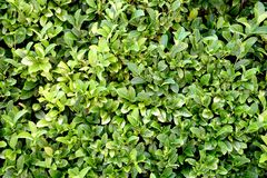 Hedge Royalty Free Stock Photography