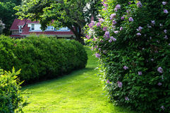 Hedge and Cottage Stock Photo