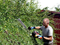 Hedge Cutting. Cutting a summer growth from a hawthorn hedge with a motorised cutter Royalty Free Stock Images