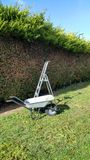 Hedge cutting in garden. Wheelbarrow, stepladder  against partially cut hedge Stock Image