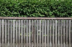 Hedge and Fence Stock Image