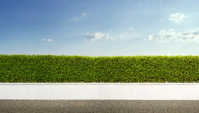 Hedge Fence Royalty Free Stock Photo
