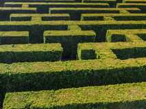 Hedge formed maze. Hedge formed into traditional maze Royalty Free Stock Image