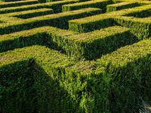 Hedge formed maze. Hedge formed into traditional maze Royalty Free Stock Photos
