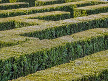 Hedge formed maze. Hedge formed into traditional maze Royalty Free Stock Photo
